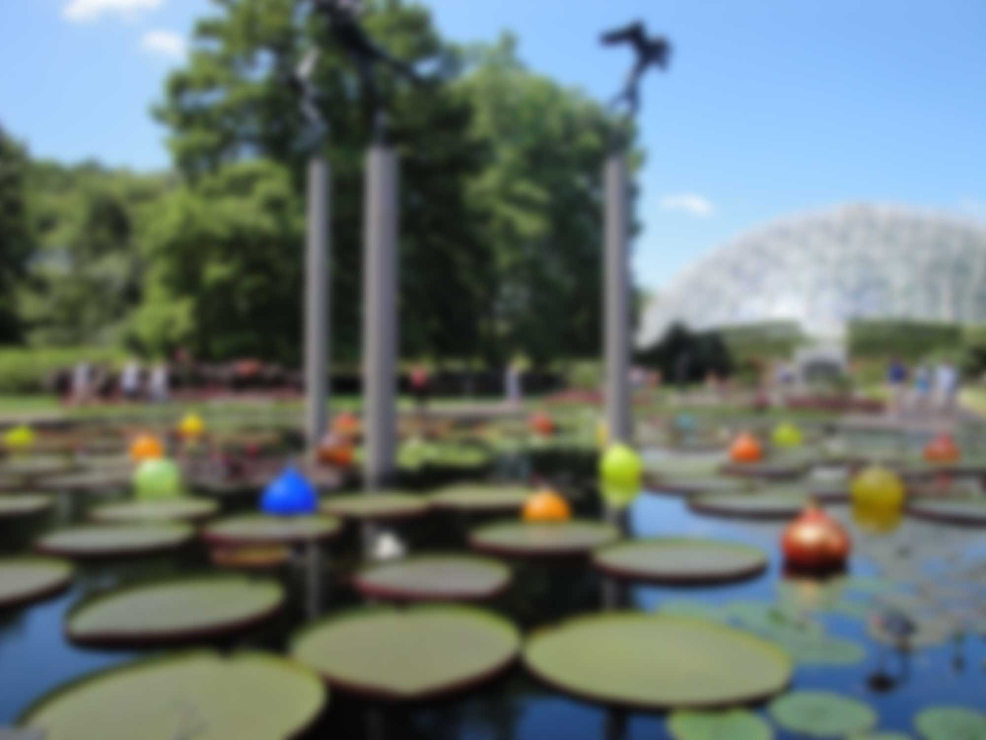 banner-botanical-blur